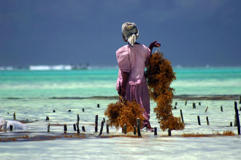 Voyage de noces à Zanzibar